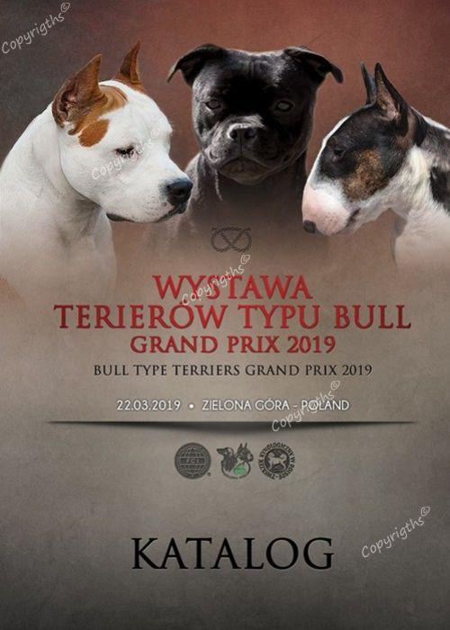 Dodatkowe Krajowa Wystawa Terierów Typu Bull Zielona Góra 22-03-2019 KG93